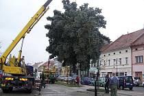 Stavění vánočního stromu Rakovník 2010