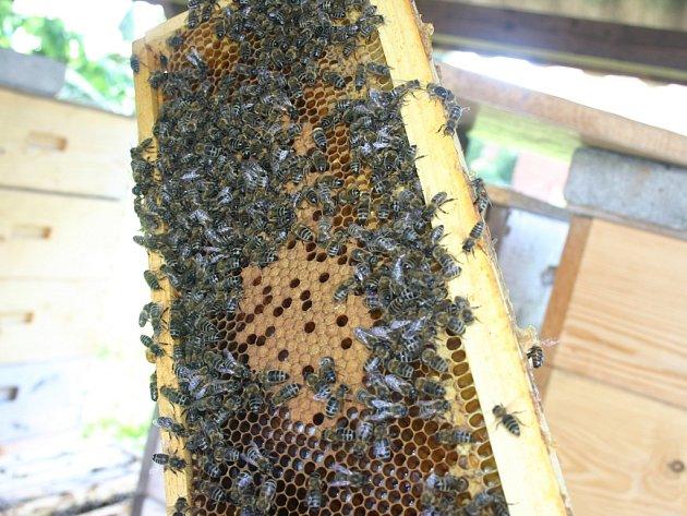 Včely ilustrační foto