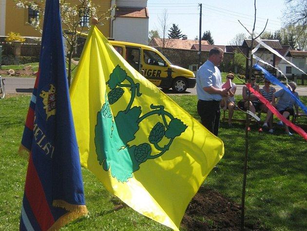 Stavění máje a výsadba památného stromu ve Velké Chmelištné