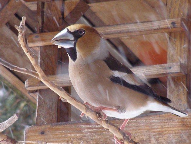 Pohled do ptačího krmítka