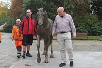 Instalace soch koní před knihovnou v Rakovníku
