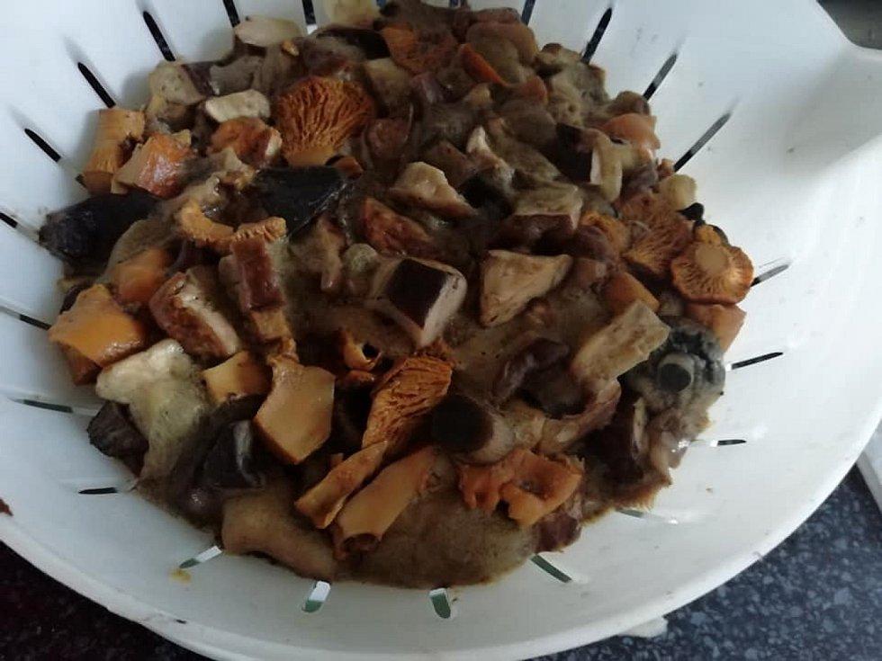 Alena Smáhová ráda houbaří v okolí Skryjí.