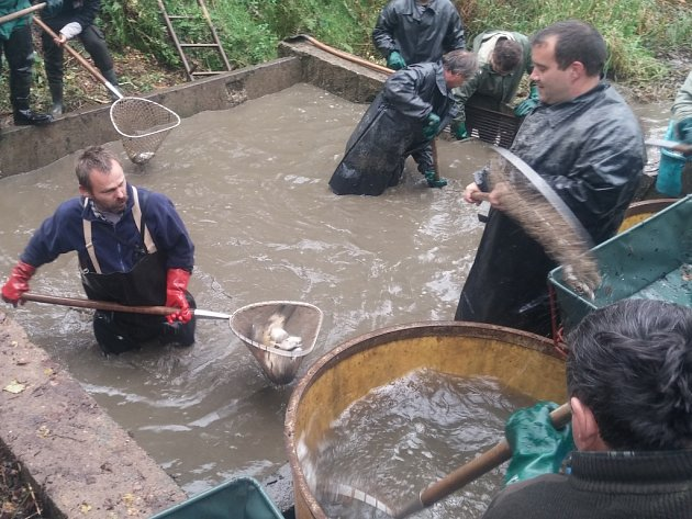 Výlov rybníka Zbořený