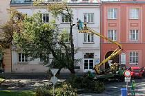 Kácení stromu v Tyršově ulici v Rakovníku