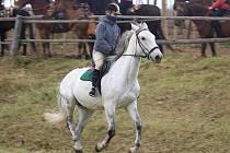 Hubertova jízda Mutějovice 2010