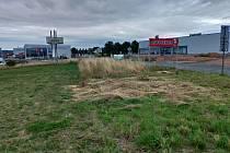 Vysoká tráva komplikuje život řidičům. Alespoň část už je posekaná a do křižovatky je tak lépe vidět.