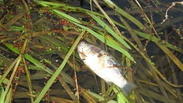 Ekologická  havárie na rybníku u Kočkova mlýna