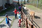 Děti z Mateřské školy Šamotka si přírodní areál školky nemůžou vynachválit.