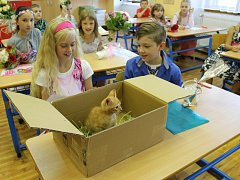Ve 2.C 2. ZŠ v Rakovníku paní učitelka dětem nejprve rozdala pochvaly a pak vysvědčení.