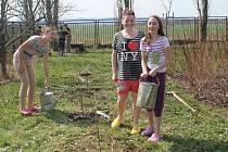 Výsadba stromů na školní zahradě ZŠ Jesenice