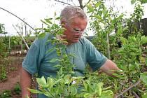 Václav Vohralík prohlíží škody na zahradě