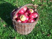 Jablka - ilustrační foto