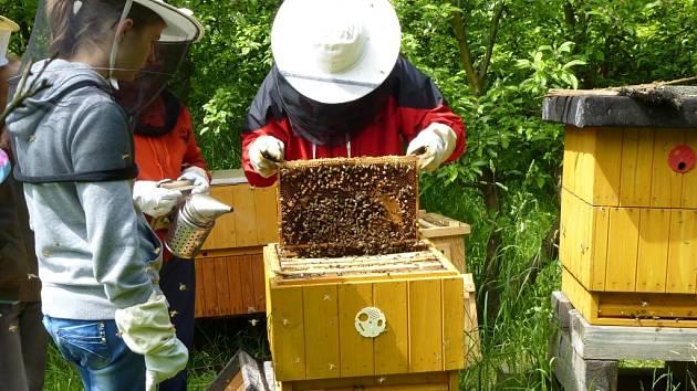 Práce ve včelařském kroužku při 3. ZŠ v Rakovníku