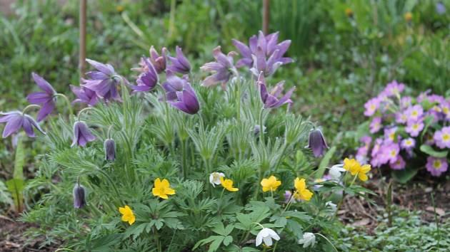 Ekologická soutěž na botanické zahradě