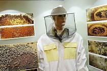 Výstava v roubence