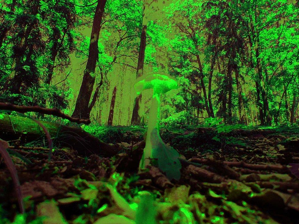 Tomáš Zajíc chodí pravidelně do lesa v okolí rakovnických Sudet.