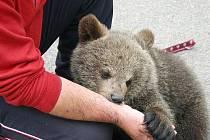 Do Mutějovic přijelo mězi školáky medvídě