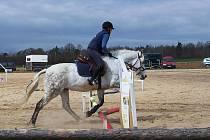 Koně Pšovlky