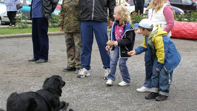 Psi na náměstí.