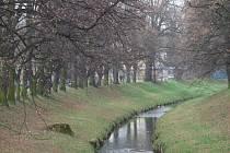 Stromy podél Rakovnického potoka