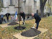 V neděli dopoledne vysadili Rakovničtí v parku u kostela sv. Bartoloměje lípu ke 100. výročí vzniku republiky