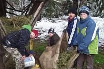 Vánoční přikrmování zvěře v Kněževsi
