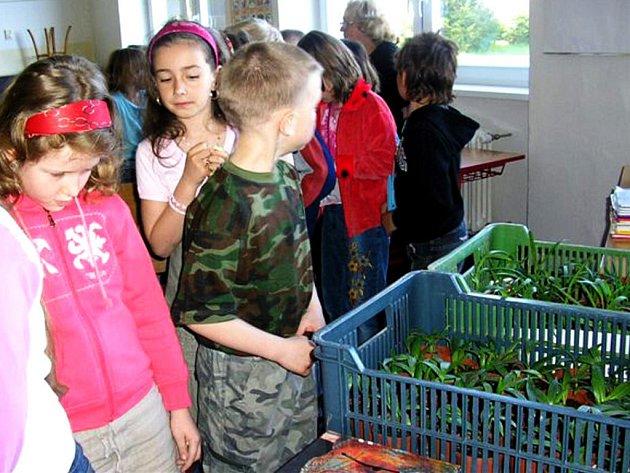 Žáci si mohli stejně jako loni koupit sazeničky pokojových palem.