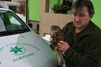Pavel Moulis, předseda ZO ČSOP, je na snímku se samečkem káně lesní, který byl nalezen u Králova Dvora vysílený. Bez pomoci člověka by zahynul.