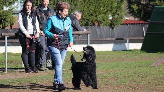 Jarní závod psů - Hrádek u Rokycan.