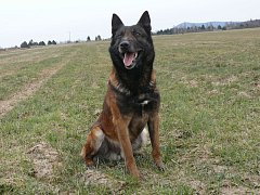 Policejní pes URS.