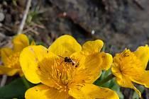 Jaro na Rokycansku.