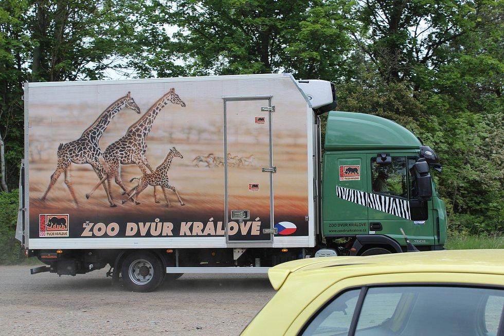 Zubr Tábor přijel do Rokycan v květnu 2020