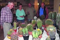 Předsálí rokycanské sokolovny obsadili pěstitelé kaktusů a sukulentů. Patří mezi ně Milan Majer, částečně skrytý Roman Krajdl, Alena Dvořáčková, Josef Červinka nebo Karel Císař (zleva).