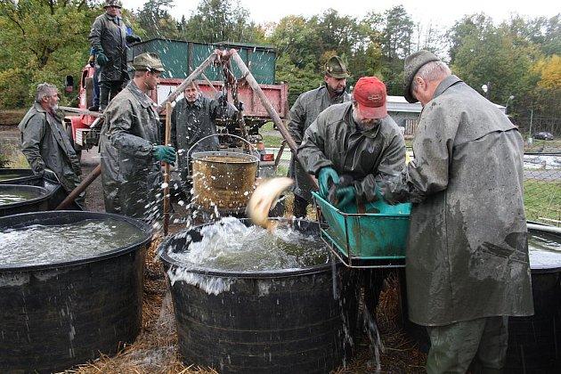 První velký výlov na Rokycansku se odehrával včera. Zaměstnanci Rybniční správy J. C. MANNSFELDA, Zbiroh, přemísťovali šupináče z Čápského rybníka do sádek.
