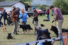 Oblastní výstava německých ovčáků v Rokycanech.