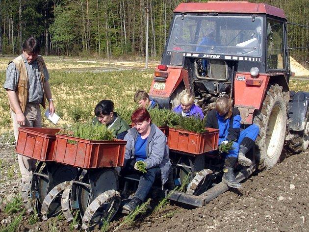 Stanislav Suda přihlíží, jak se na školkovacím stroji daří práce týmu ve složení Žornová, Burianová, Chvalová, Strnadová a Lenovská.