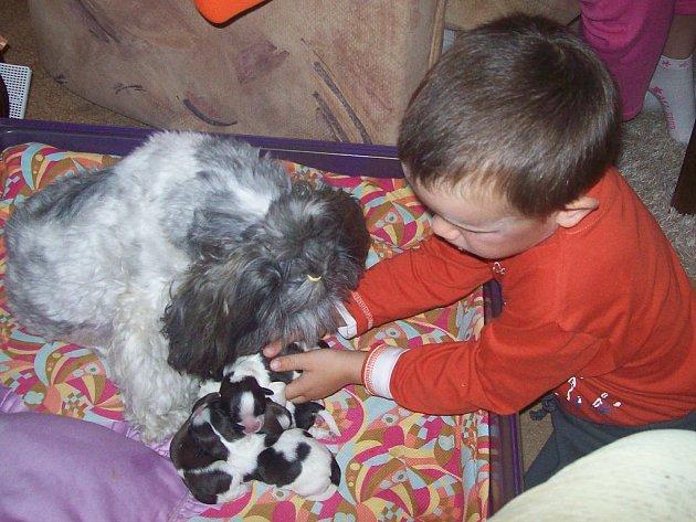 Baculatá psí maminka rasy Ši–Tzu jsou ve Volduchách miláčkem mnohých. Máma Nelly nejdříve pouští hrůzu, ale pak trpělivě nechá své děti pomazlit.