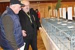 Výstava holubů v Lidovém domě v Cheznovicích.