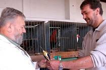 K mirošovské pouti patří expozice domácího zvířectva. Také letos se členové místní organizace chlubili a odnášeli si některé ceny. Jednatel Petr Burýšek (vpravo) právě blahopřeje kolegovi Jindřichu Pouskovi z nedalekého Mešna, který se prosadil s drůbeží.