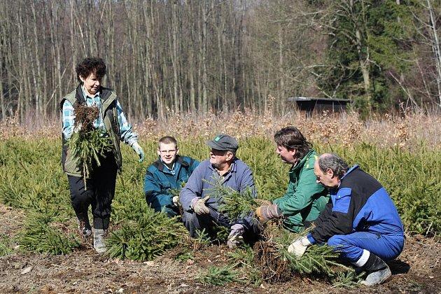 Lesáci se činí se sázením. Na snímku Hana Boušová, Hubert Bőhm – mladší a starší,  Václav Pokorný a Jaroslav Kuneš vyzvedávají sazenice  smrčků  v lesní školce Němčičky.