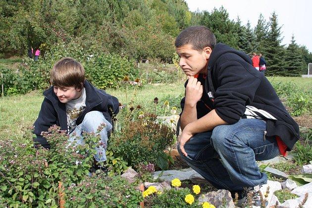 Tomáš Biháry a Daniel Otto se zájmem pozorují, co by v bylinkové spirále poznali. U většiny rostlin  se trefili.  Foto: