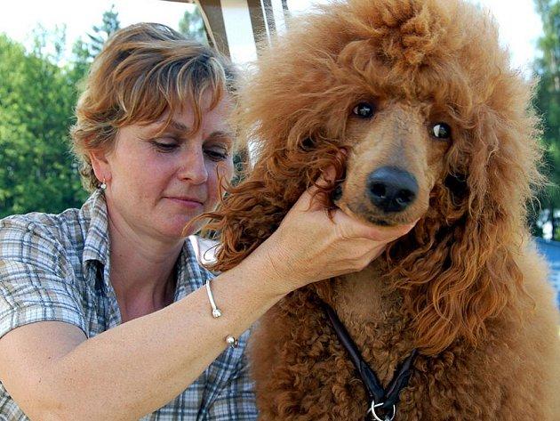 Bezmála pět set čtyřnohých krasavců se prezentovalo při sobotní výstavě psů v Rokycanech. Běla Dulovcová dorazila s královským pudlem z Kralup nad Vltavou.