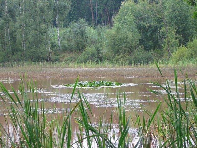 Dolní kokotský rybník před revitalizací.