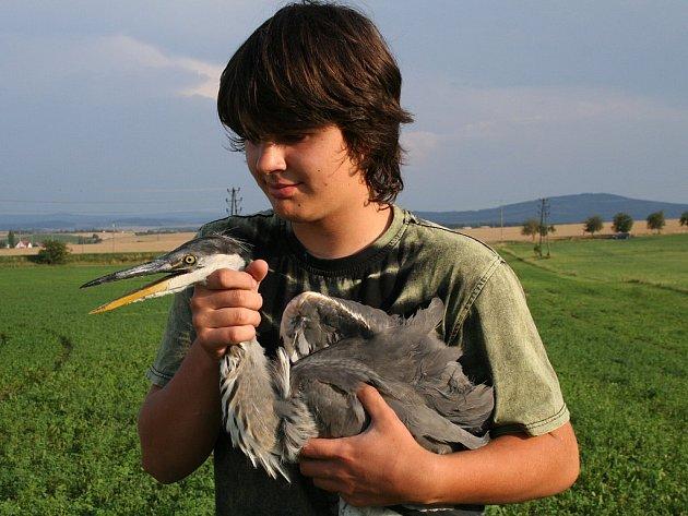Petr Moulis ze záchranné stanice živočichů vypustil uzdravenou volavku.
