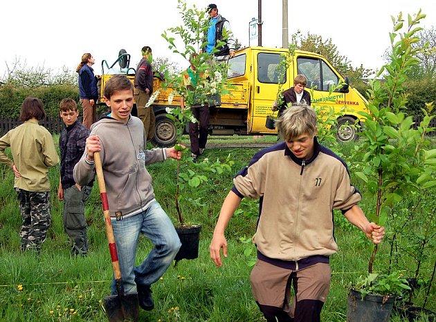V rokycanské Šťáhlavské ulici sázeli včera stromky deváťáci. Byli mezi nimi Josef Šimsa a Jan Ryba (zleva) z 9. B ZŠ TGM.