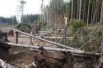 Vichřice Emma řádila v okolí hájenky u Stupna. na tomto místě padlo hned dvě stě padesát kubíků dřeva.