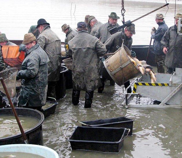 Mokré žně byly zahájeny 7.října ve Kařezském horním rybníku.
