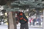 Instalace vánočního stromu v Rokycanech.