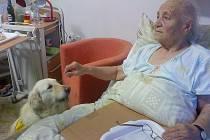 Canisterapie v nemocnici. Pacienti oddělení interny Rokycanské nemocnice, a.s., si pochvalovali návštěvu speciálně vycvičených psů.
