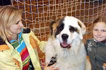 V házenkářské hale HK Rokycany se představilo v sobotu bezmála třicet plemen psů. Byl mezi nimi ussurtar jménem Akim, což je prý typ horské rasy. Od Loun s ním přijely Lenka Korolová s dcerou Karolínou.